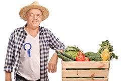 Mature farmer with an award badge. On his shirt leaning on a crate full of vegetables isolated on white background Royalty Free Stock Photography