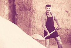Mature farmer with big shovel in barn Royalty Free Stock Images