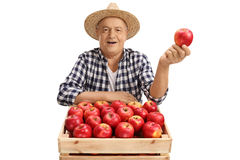 Mature farmer holding an apple behind crate filled with apples Royalty Free Stock Photo