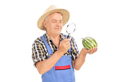 Mature farmer inspecting a small watermelon. Through a magnifying glass isolated on white background Stock Photos