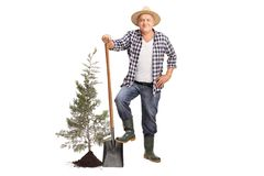 Mature farmer posing with a shovel next to a planted tree. Full length portrait of a mature farmer posing with a shovel next to a planted tree isolated on white stock photos