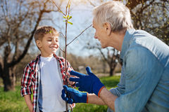 Mature farmer teaching grandson how to plant trees Stock Images