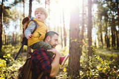 A mature father giving a toddler son a piggyback ride in an autumn forest. stock image
