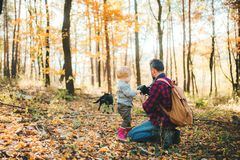A mature father and a toddler son in an autumn forest, taking pictures with a camera. royalty free stock photo