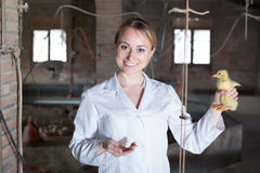 Mature female veterinarian holding duckling Stock Photography