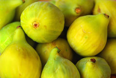Mature figs. Stock Photography