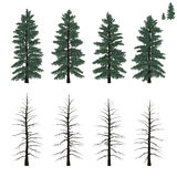 Mature firs set Royalty Free Stock Photography