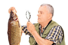 Mature fisherman examining a fish with magnifier Stock Photos