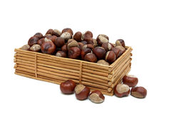 Mature fruit of chestnut isolated on white background. Stock Images