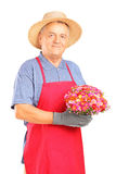 A mature gardener holding a bouquet of flowers royalty free stock photo