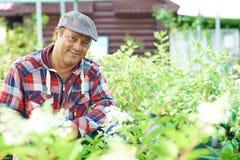 Mature gardener Royalty Free Stock Photo