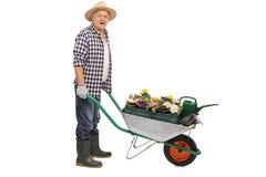 Mature gardener pushing a wheelbarrow stock photography