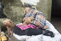 Mature homeless woman outdoors begging with two dogs stock photography