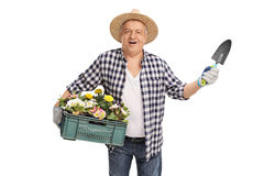 Mature horticulturist holding a rack of flowers Stock Photos