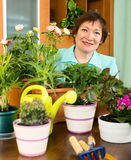 Mature housewife  working with fresh flowers in pots Royalty Free Stock Images