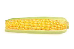 Mature maize ear Royalty Free Stock Photography
