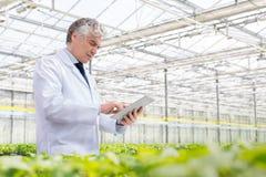 Mature male biochemist using digital tablet in plant nursery stock photos
