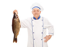 Mature male chef holding an uncooked fish Royalty Free Stock Photography