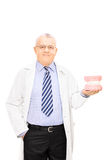 Mature male dentist holding a teeth sample made out of plaster c Royalty Free Stock Photography
