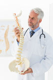 Mature male doctor holding skeleton model in his office Royalty Free Stock Photography