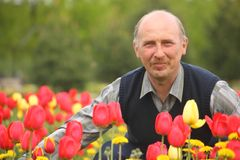 Mature man among blossoming tulips Royalty Free Stock Photography