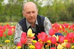 Mature man among blossoming tulips Royalty Free Stock Image