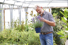 Mature Man Choosing Plants At Garden Center Royalty Free Stock Images