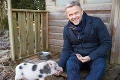 Mature Man Feeding Pet Micro Pig Stock Images