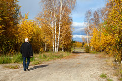 Mature man in forest. Elderly man with gray beard for a walk in the forest at the beginning autumn Stock Images