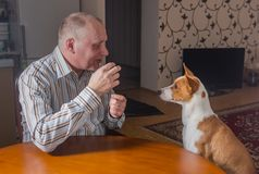 Mature man having conversation with basenji dog. Sitting at the table Royalty Free Stock Images