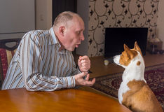 Mature man having nervous conversation with basenji dog sitting at the table. The dog listens with passivity, while man gesticulates Stock Image