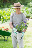 Mature man holding potted plant in garden Royalty Free Stock Images