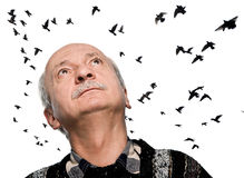 Mature man looking up on flying birds. Mature man looking up on sky with flying birds Stock Photos