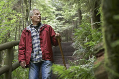 Mature Man Looking Up In Forest Stock Image