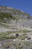 Mature man mountain hiking Royalty Free Stock Image