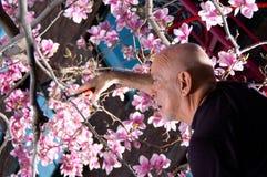 Mature man pruning tree Royalty Free Stock Photos