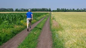 Mature man running on an earth road between agricultural fields at summer season stock footage