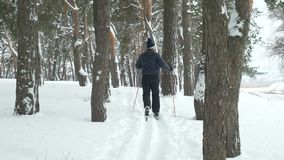 Mature man skiing outside. In park with pine trees stock video