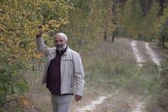 Mature man stand near yellow birch Stock Image