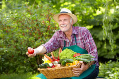 Mature man with straw hat presenting a tomato Stock Photo