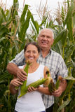Mature  man and woman in  corn field Stock Photo