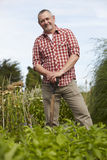 Mature Man Working On Allotment Royalty Free Stock Photography