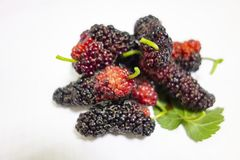 Mulberry on a white background stock photography
