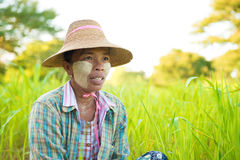 Mature Myanmar farmer Stock Image