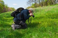 Mature naturalist taking photo outdoor. Mature naturalist taking photo of dandelion flower Stock Photography