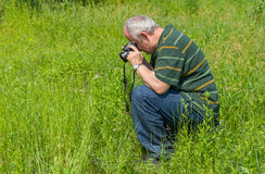 Mature photographer taking a photo of Common Blue butterfly. Enthusiastic mature photographer taking a photo of Common Blue butterfly Royalty Free Stock Photos