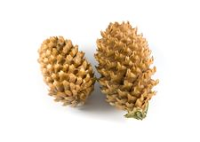 Mature pine cones Royalty Free Stock Photos