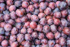 Mature plum fruits Royalty Free Stock Images