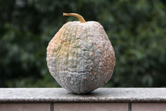 Mature pumpkin Stock Image