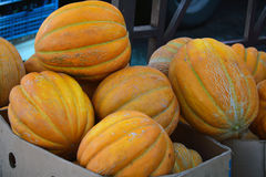 Mature pumpkins for sale Royalty Free Stock Photo